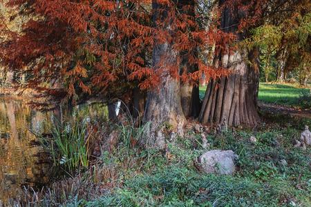 bark rain tree: The roots of the tree at its foot.