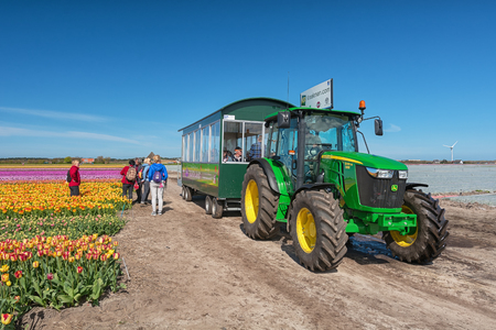 Zijpe, Netherlands - May 1, 2016: Tourists are Transported by tractor along the beautiful flower fields in the head of the province of North Holland in The Netherlands.