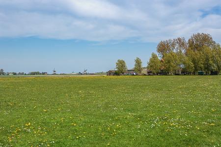Typisch Nederlands polderlandschap met molen op de achtergrond