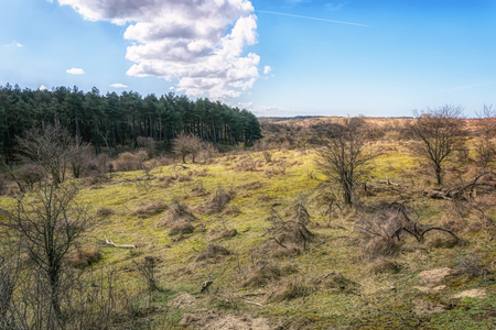 Typical Dutch dune landscape that is part of the Zuid Kennemerland National Park Stock Photo