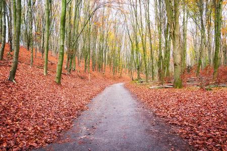 Piste cyclable sinueuse à travers une forêt néerlandaise dans de belles couleurs d'automne dans la province de Gueldre