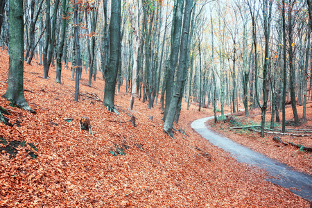 Winding bike path through a Dutch forest in beautiful autumn colors in the province of Gelderland
