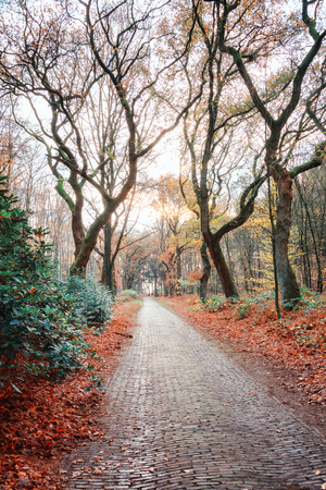 Winding bike path through a Dutch forest in beautiful autumn colors in the province of Gelderland in The Netherlands Imagens