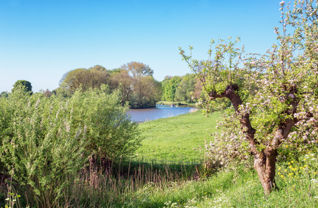 The beautiful river landscape of the river Linge in the fruit region De Betuwe in the Netherlands