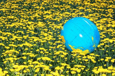 Inflatable globe in the middle of a field of yellow santinis somewhere in a greenhouse in the Netherlands 版權商用圖片