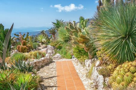 The beautiful botanical garden with exotic plants like cacti and yuccas in the village of Eze in France
