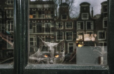 Black cat with yellow eyes on watch behind a window somewhere inAmsterdam in The Netherlands 版權商用圖片