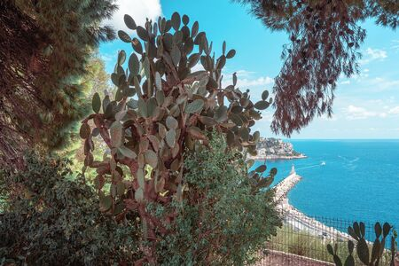 Large cactus plant with in the background the pier with lighthouse in the nice harbor seen from the hill Colline du Château in Nice in France