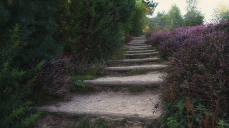 Stairs the sandy hill up in the heathlands of the Veluwe National Park in the Netherlands