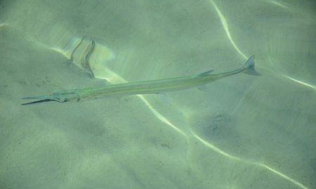 clear water: Fish in clear water