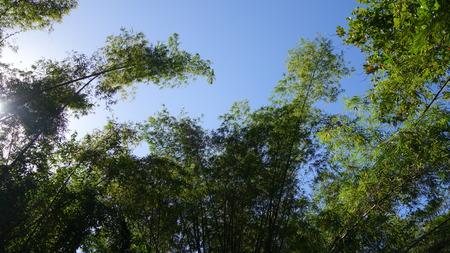 martha: Bamboo trees