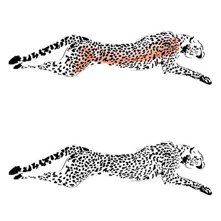 Cheetah Vettoriali
