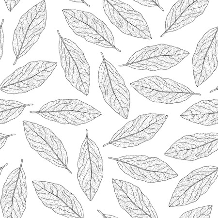 Bay leaf seamless pattern. Hand-drawn Laurel leaves on a white background. Vector drawing.