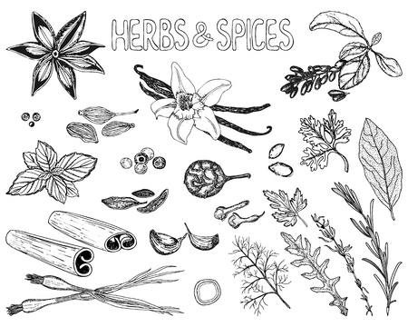 Herbs and spices set in sketch style. Hand drawn ingredients isolated on white background. Vector illustration. Vettoriali