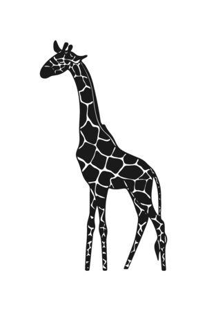 Vector drawn giraffe icon. African wild animal on white background.