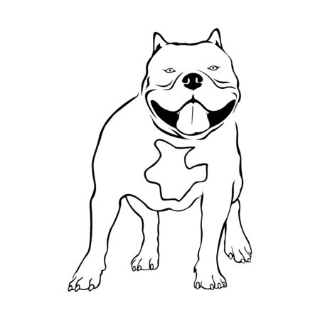 American bully dog. Bully vector illustration on white background.