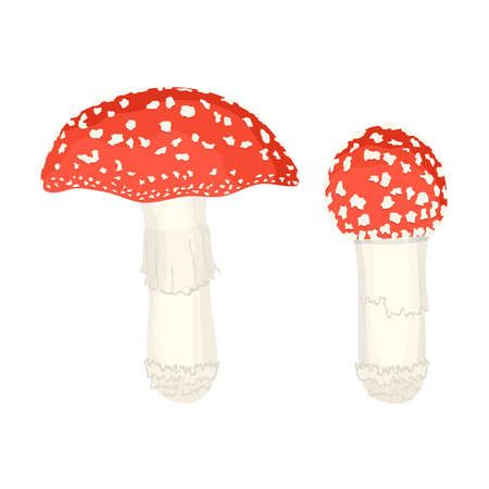 Amanita mushrooms vector illustration on white.