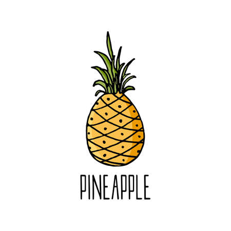 Pineapple vector illustration on white.