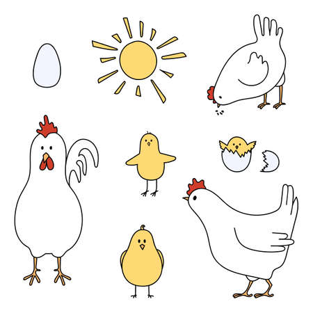 Set of chicken, rooster and eggs. Vector illustration. 向量圖像