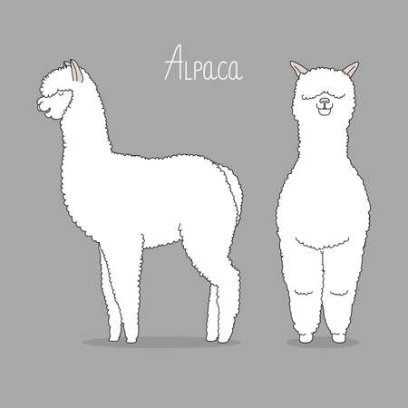 Lama vector illustration. Fas and profile.