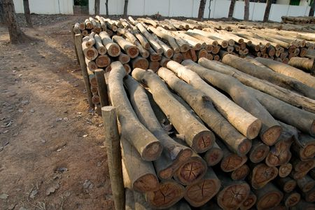 Logs, India photo