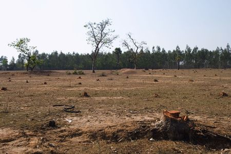 developing country: Deforestation in West Bengal, India.  Stock Photo