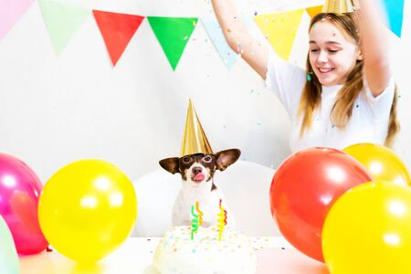Cute small funny dog with a birthday cake and a party hat celebrating birthday with girl mistress. Beautiful young woman and a dog in holiday caps. Dog birthday party. Friendship concept.. Banque d'images - 138555229