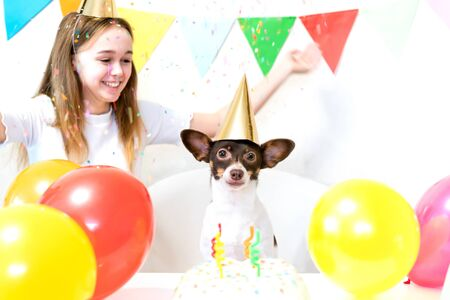 Cute small funny dog with a birthday cake and a party hat celebrating birthday with girl mistress. Beautiful young woman and a dog in holiday caps. Dog birthday party. Friendship concept.. Banque d'images - 138555362