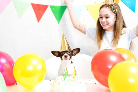 Cute small funny dog with a birthday cake and a party hat celebrating birthday with girl mistress. Beautiful young woman and a dog in holiday caps. Dog birthday party. Friendship concept.. Banque d'images - 138555325