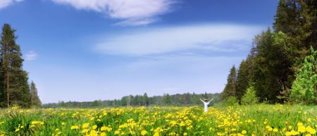 Panorama of a blossoming meadow Stock Photo - 4057794