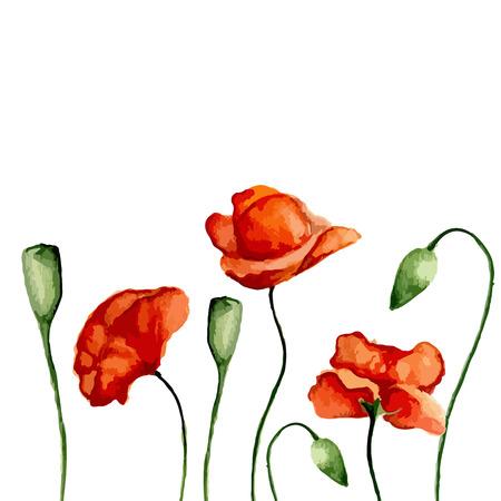 opium: Blossom poppies. Watercolor. Vector illustration