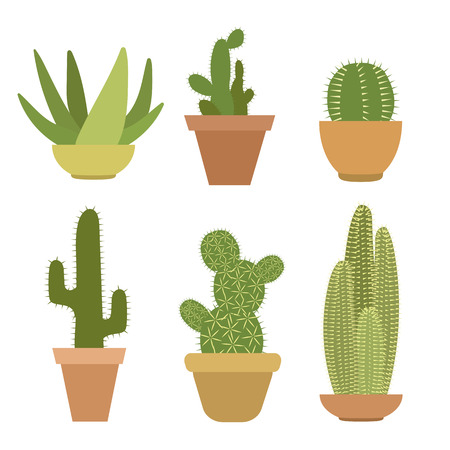 Set of six green cactus