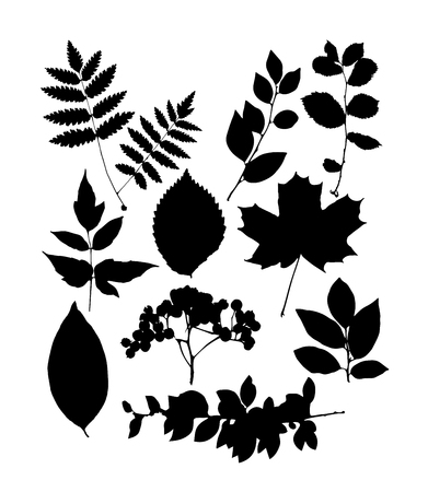 Set of black leaf templates. Vector illustration