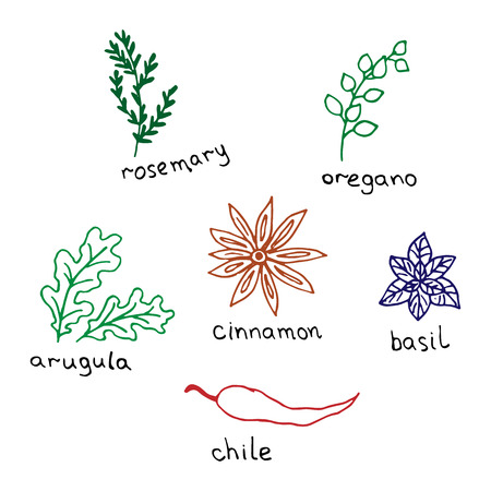 Herbs and spices drawn by hand on a white background