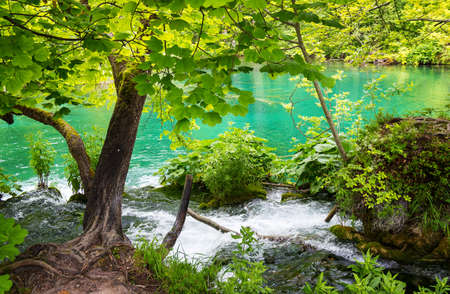 summer trees: National park the Plitvice lakes in Croatia Stock Photo
