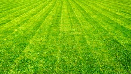 cut grass: Bowling green cut grass lines background.