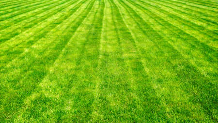 lawn grass: Bowling green cut grass lines background. Stylized painting Stock Photo