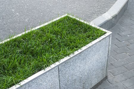 Green grass in a decorative lawn on the street.