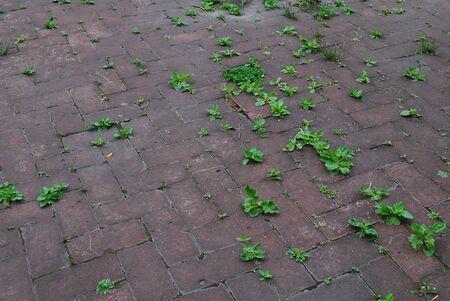 Grass sprouted through asphalt tiles Stock Photo
