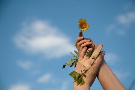 Human hands holding dandelion plant new life concept. Nature care concept. Planet care concept