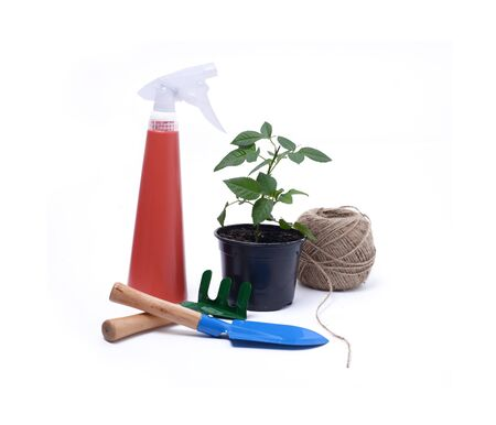 garden tools for growing indoor plants isolated on white background Stock Photo