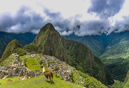 Two Llamas on a grass plateau area in Machu Picchu
