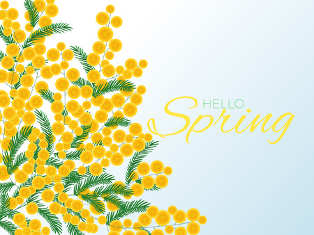 Romantic background with mimosa bouquet and spring greeting lettering