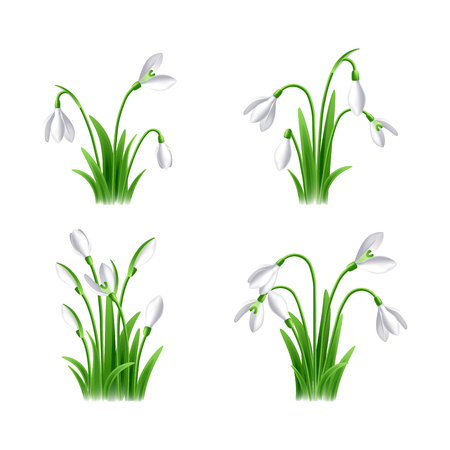 Vector illustration of snowdrop flowers on white background set Imagens - 124351411