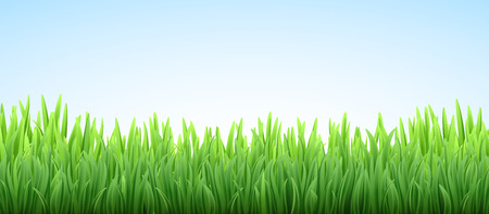 Vector grass border on the sky illustration Imagens - 124351412
