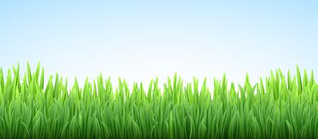 Vector grass border on the sky illustration