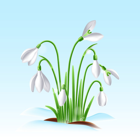 First spring snowdrop flowers on a snow with beautiful lights on sky background Ilustração