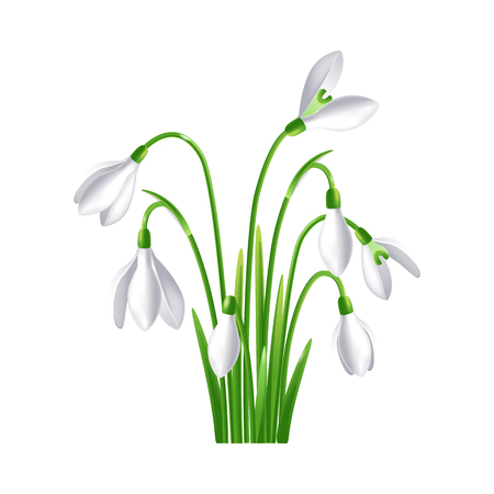 Beautiful vector design element of spring flower snowdrop or galanthus Ilustração