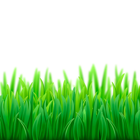 Super realistic, detailed fresh green vector grass. Isolated plant stems for front plan nature illustration Imagens - 124288979