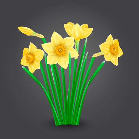 Bouquet of yellow daffodils on a neutral background. Photorealistic vector illustration